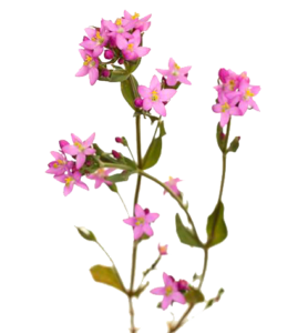 CENTAURY PNG