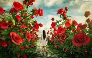 249959 czerwone roze ciezka kobieta spacer 300x189