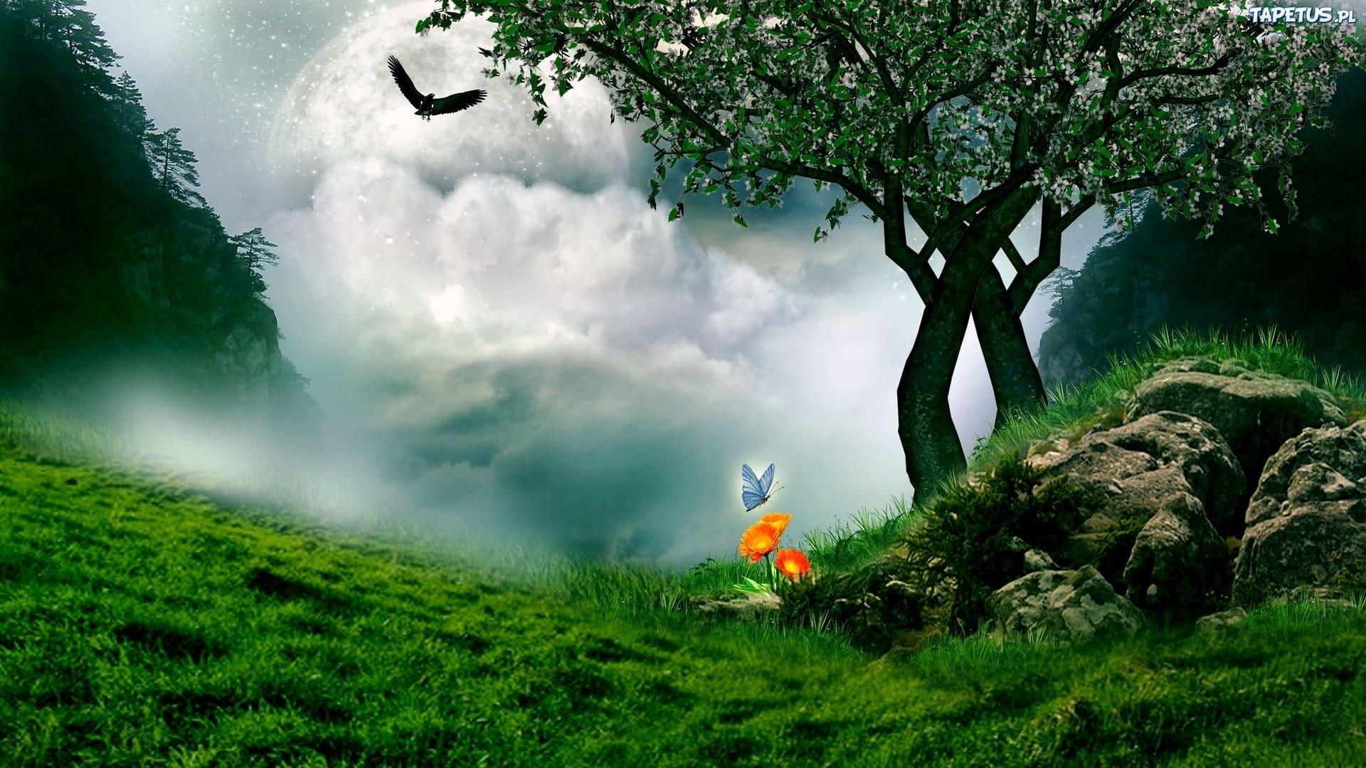 252221 motylek kwiatek ptak drzewo aka chmury
