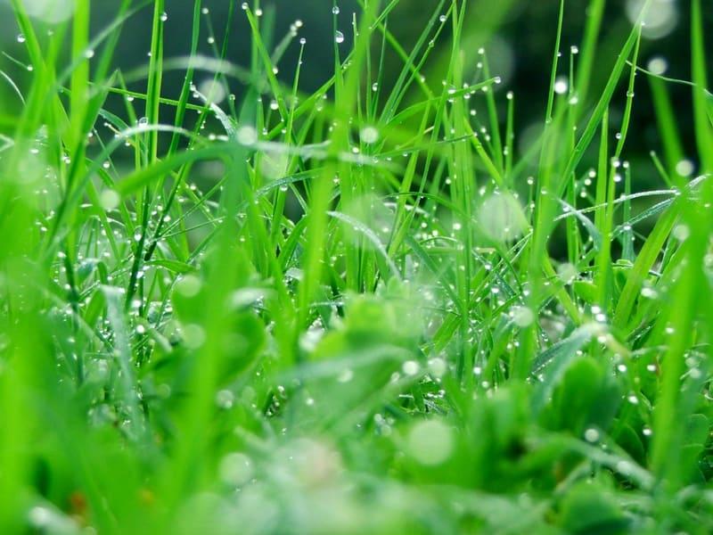 Zielony barwnik dla zdrowia