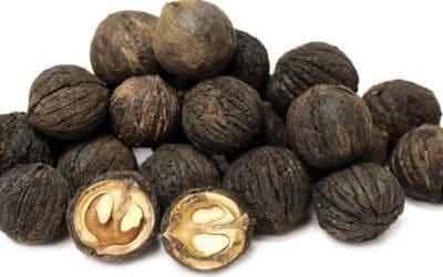 Czarny orzech bezwzględny dla pasożytów, grzybów i bakterii